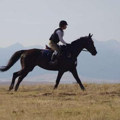 MtnAire Sport Horses