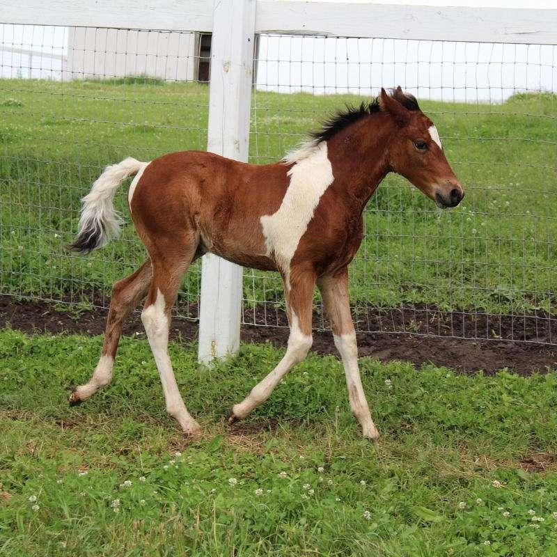 Rebekah's Horse Ranch