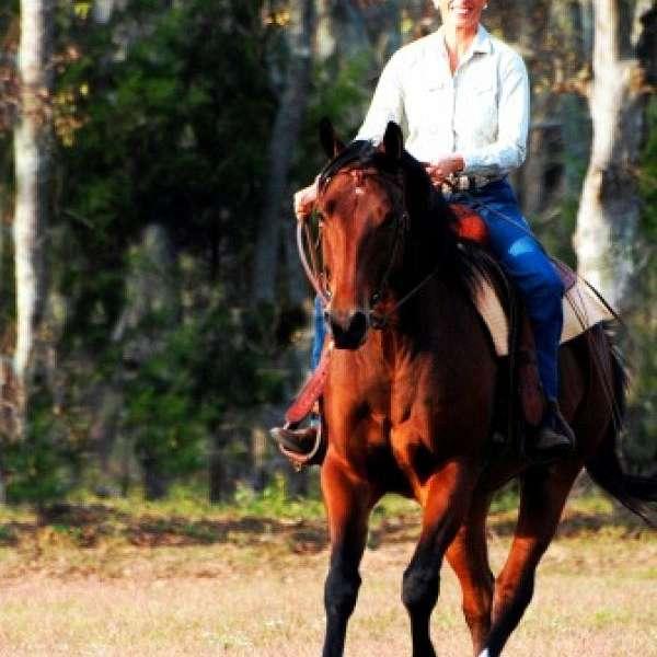 Unnatural Horsemanship