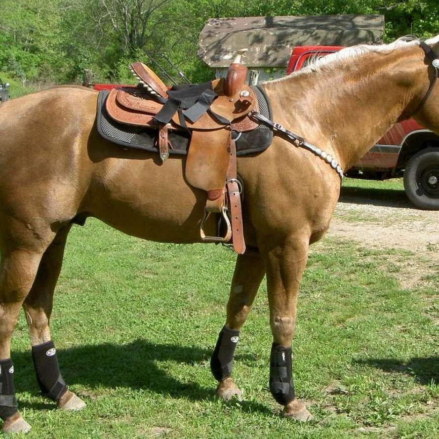 Turan Quarter Horses