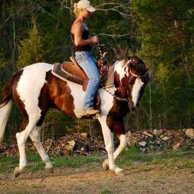 Karen Combs Horse Lessons Ringgold Ga