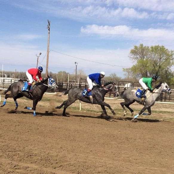 Henderson horses
