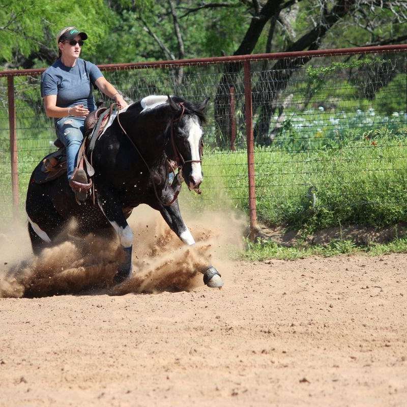 Burger Performance Horses at Canyonwood Stables