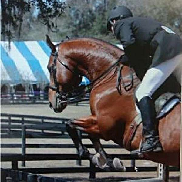Blue Moon Equestrian