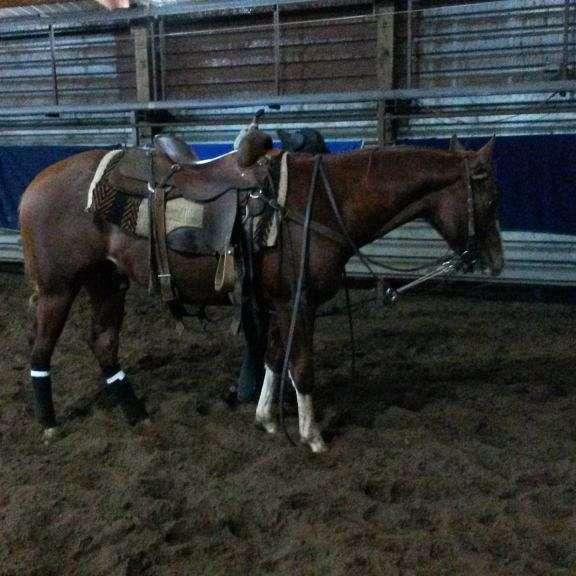 D-K Quarterhorses