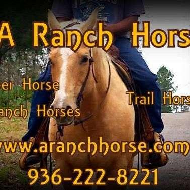 A Ranch Horse
