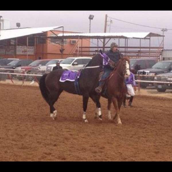 mg racing stables