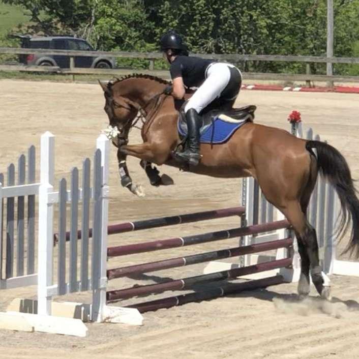 MVS Equestrian