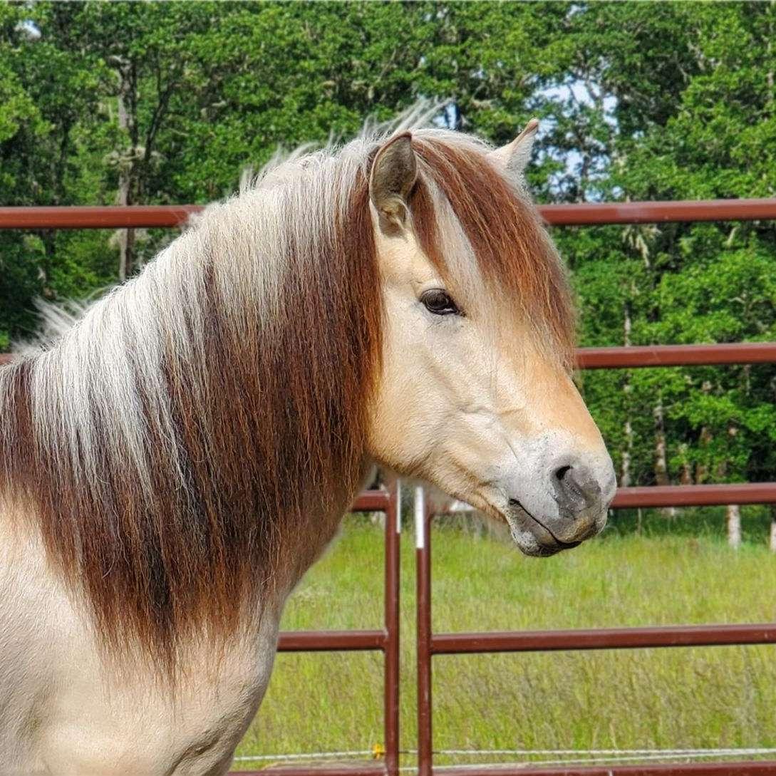 Pegasus Passion Horse Training and Sales