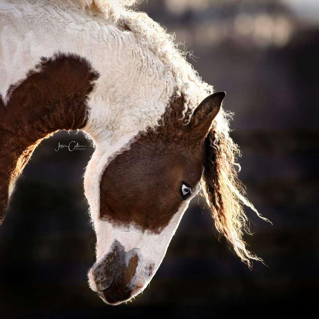 Hidden Cave Ranch