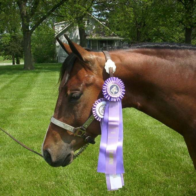 V Performance Horses