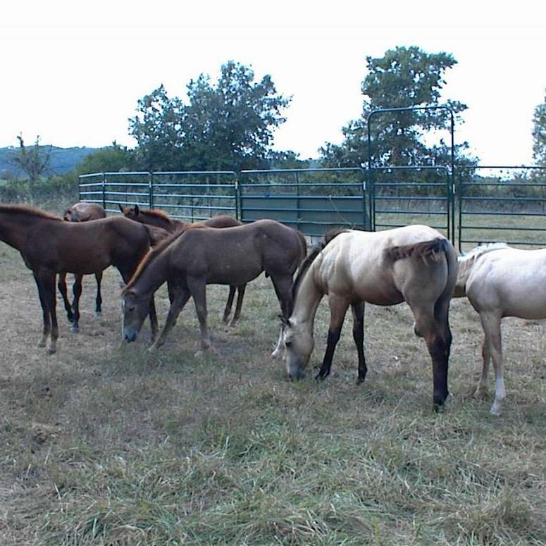 BD Quarter Horse Farm