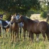 Patchwork Ponies