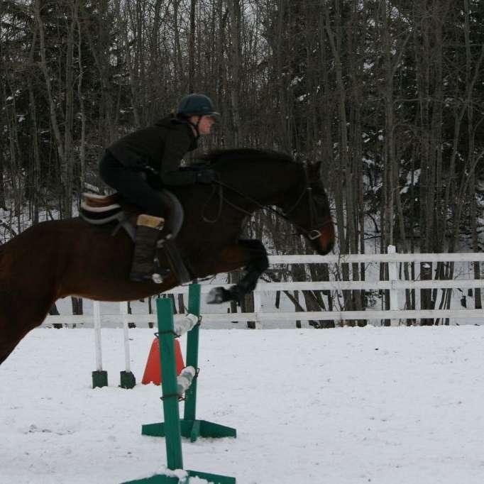Full Motion Advantage Equine Massage Training and