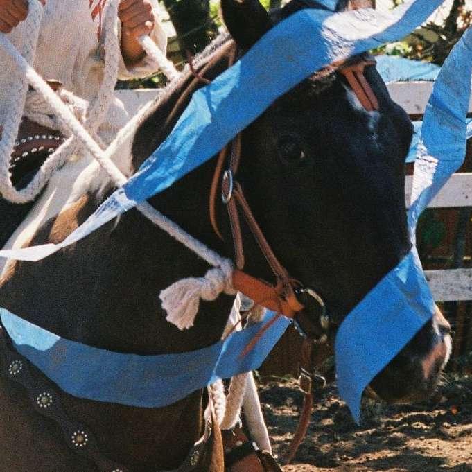 Worthy Trails Horse Training