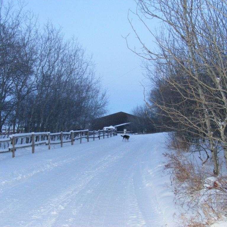 Avondale Farms