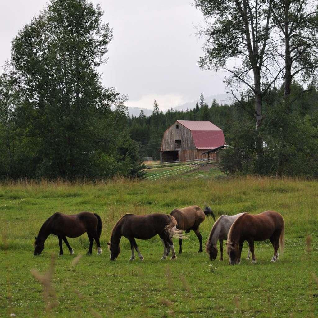 Avonlea Farm