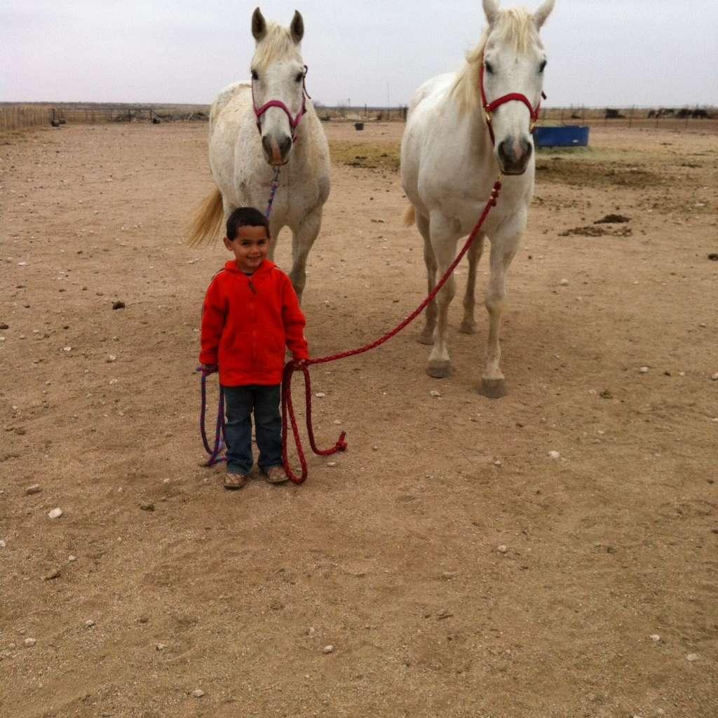 Z cross ranch horses