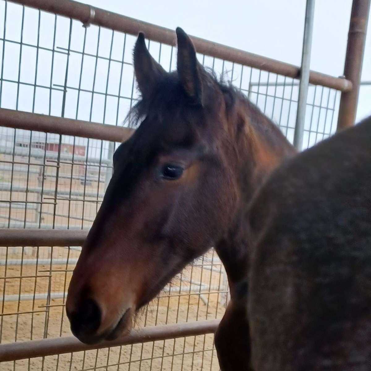 Leeanne Lloyd Equestrian Enterprises
