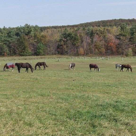 V Garre Horse Sales & Stables