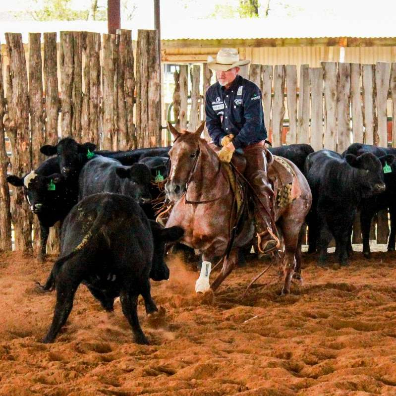 L  S Horse Company