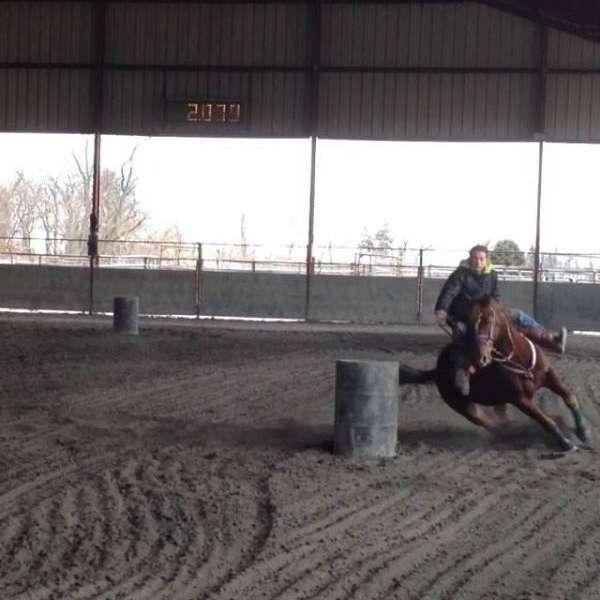 MB Barrel Horses and Horseshoeing