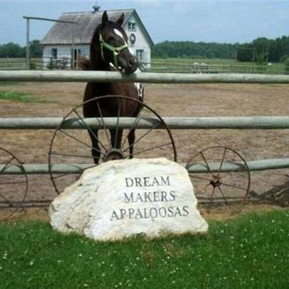 Dream Makers Appaloosas