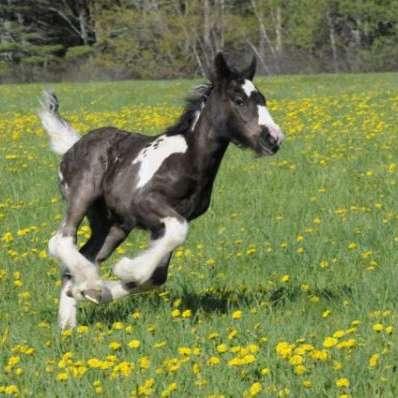 Hearts  Horses Farm