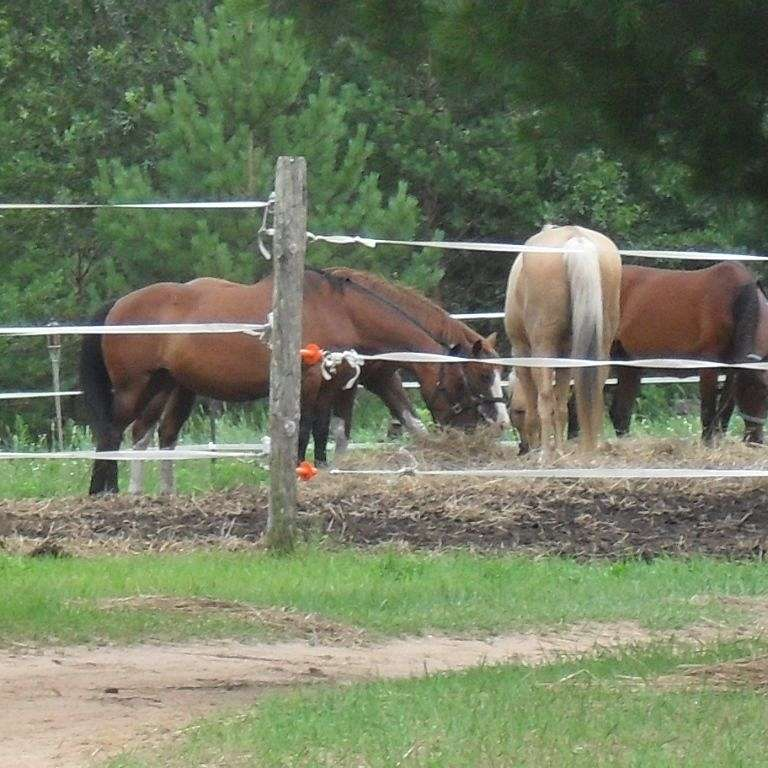Beyond the Fence Line Equine Rescue