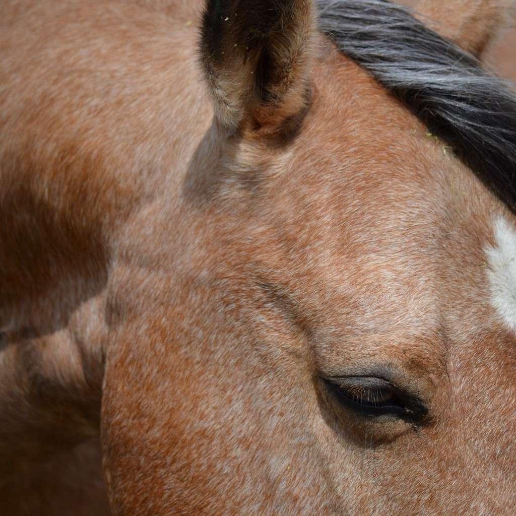 Central Montana Equine LLC.