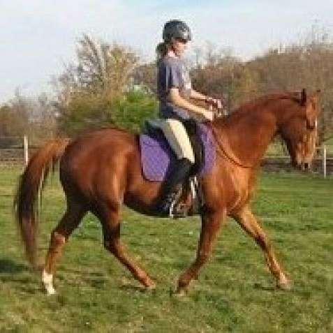 Cambria Horsemanship