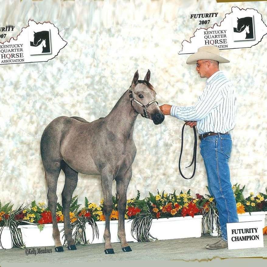 Overstreet Show Horses