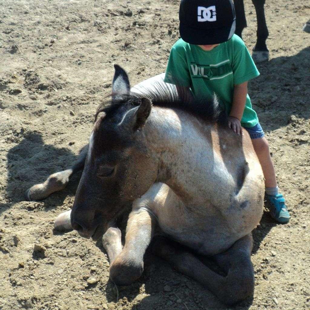 Sande Quarter Horses