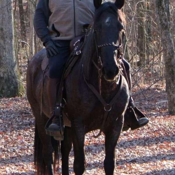 Equine Services LLC