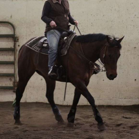 Andrea Training Stables and Services