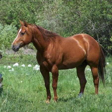 Hollasch Quarter Horses