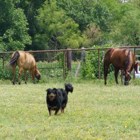 Stotts Paint  Quarter Horses Briaroaks Miniatures