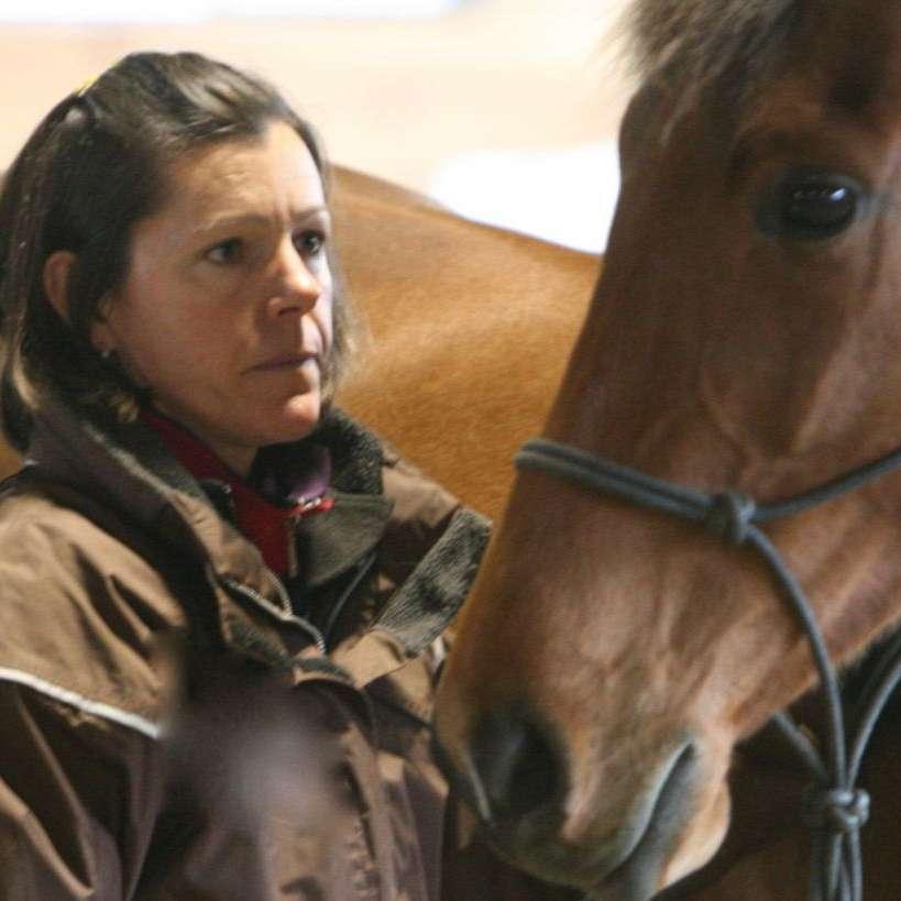 Sarah Sheehy Training & Horsemanship