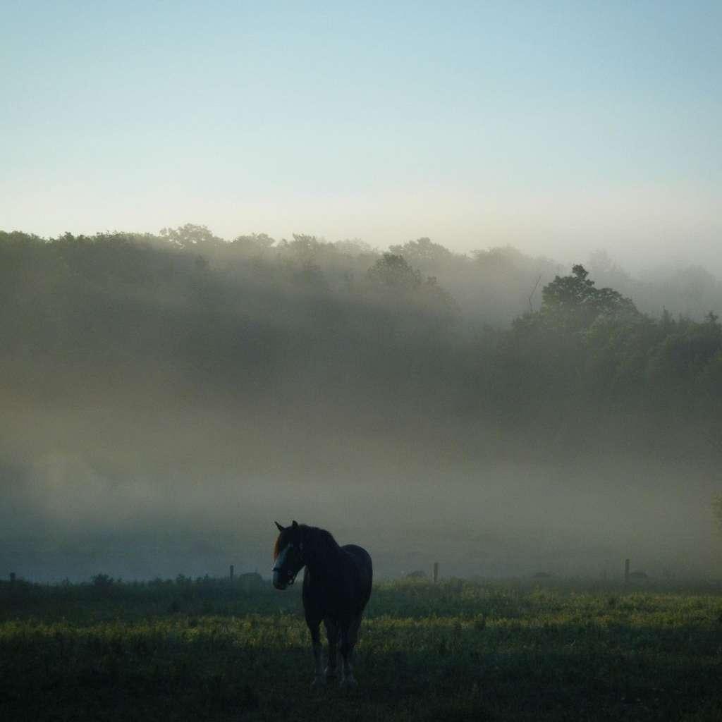 Enchanting Meadows