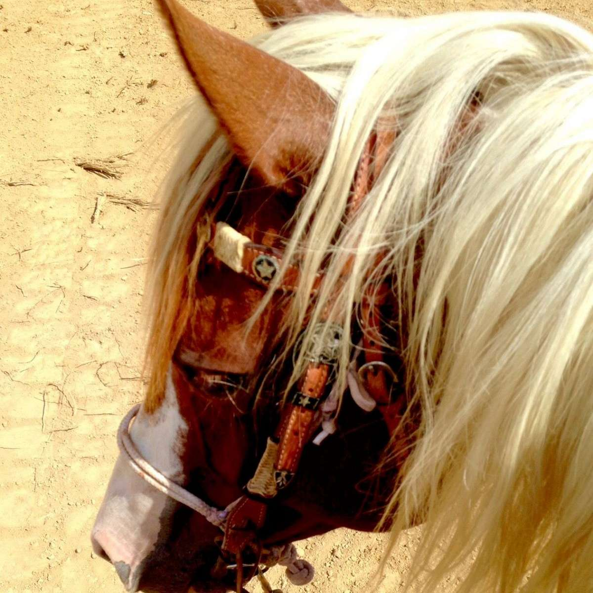 T n T Painted Ranch Horses