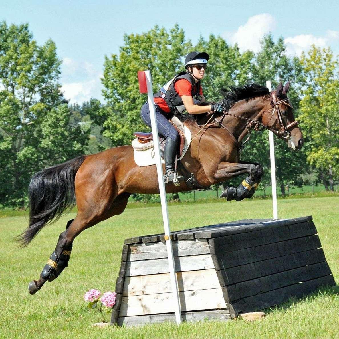RockStar Perfromance Horses