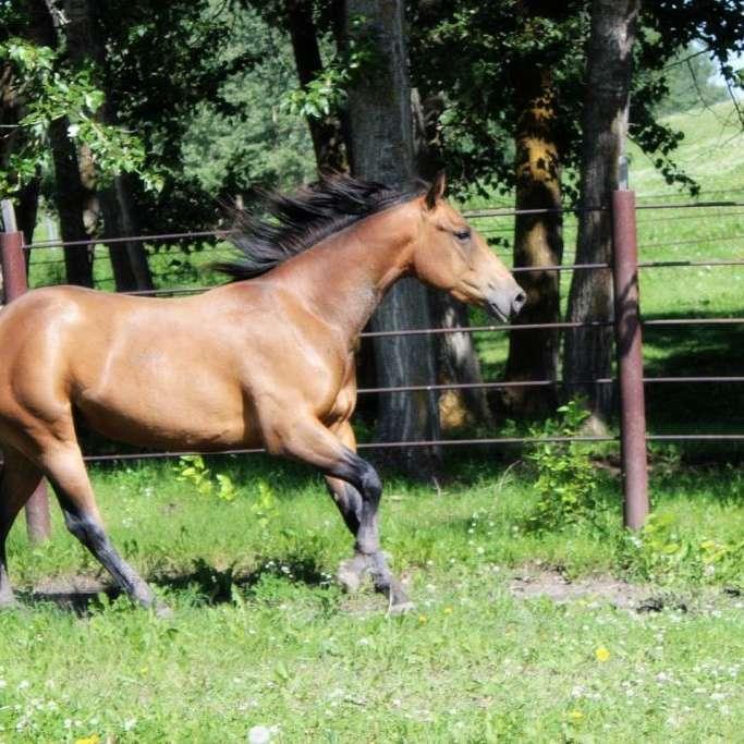 MJM Horse Services