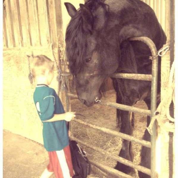 Equestrian Acres