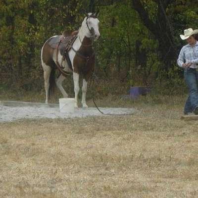 MTC Horse Training