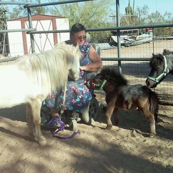 Last Hurrah Miniature Horses