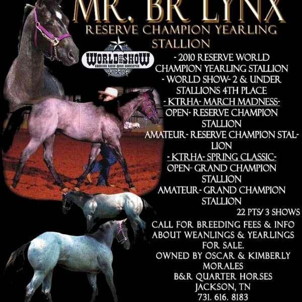 BNR. Quarter Horses