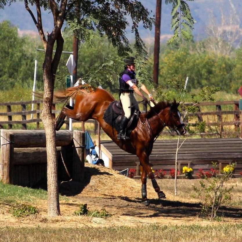Elation Equine Services