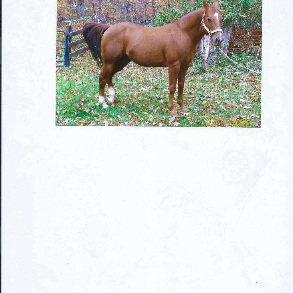 Triple J Quarter-Horse  Paint Farm