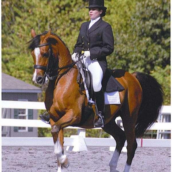 Samantha Hodgson - Superior Dressage Horses