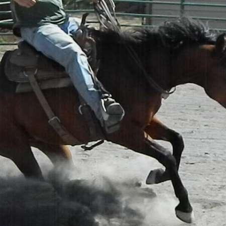 Rocking G Performance Horses